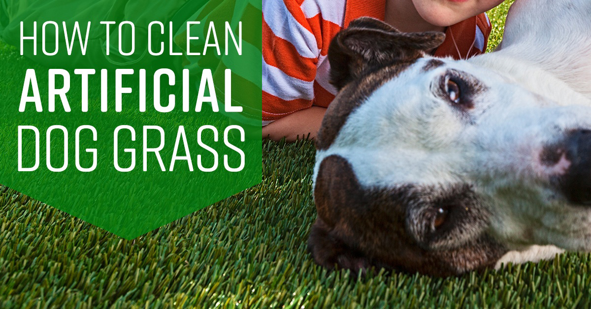 How To Clean Artificial Dog Grass Simple Green