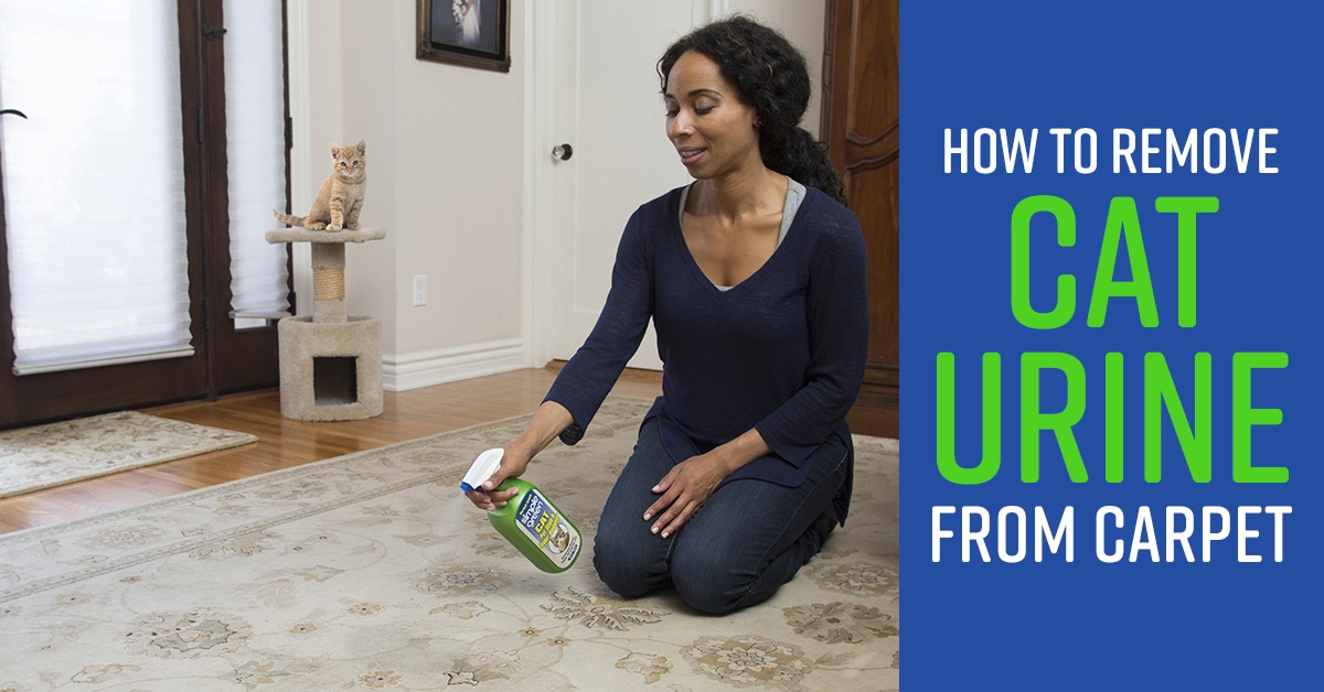How to Clean Cat Urine From Carpet
