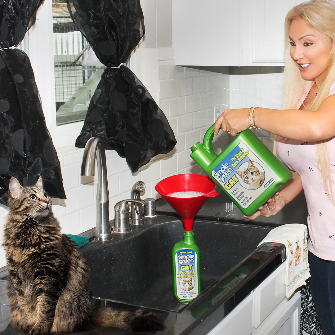 Tips For Cats in Quarantine