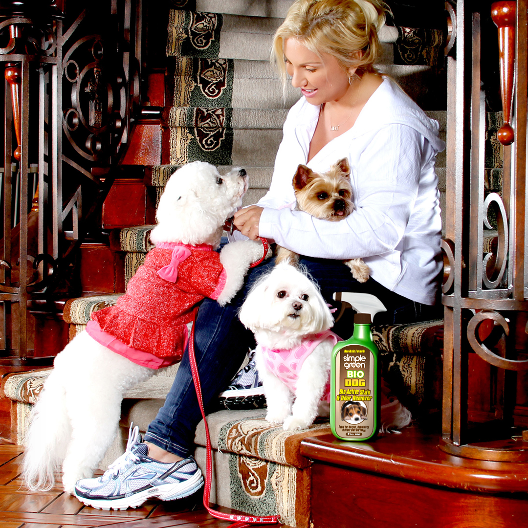 Stuck Indoors: Keeping Your Dog Healthy & Safe